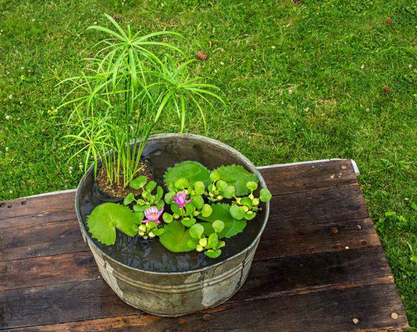 crear-un-jardin-acuatico-en-un-contenedor-01