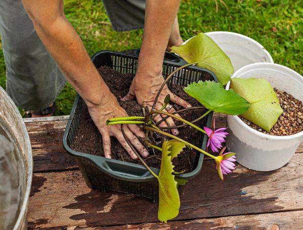 crear-un-jardin-acuatico-en-un-contenedor-04