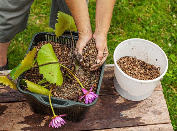 crear-un-jardin-acuatico-en-un-contenedor-05