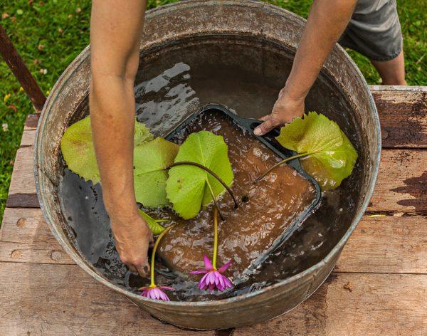 crear-un-jardin-acuatico-en-un-contenedor-06
