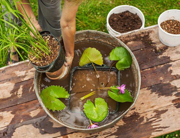 crear-un-jardin-acuatico-en-un-contenedor-07