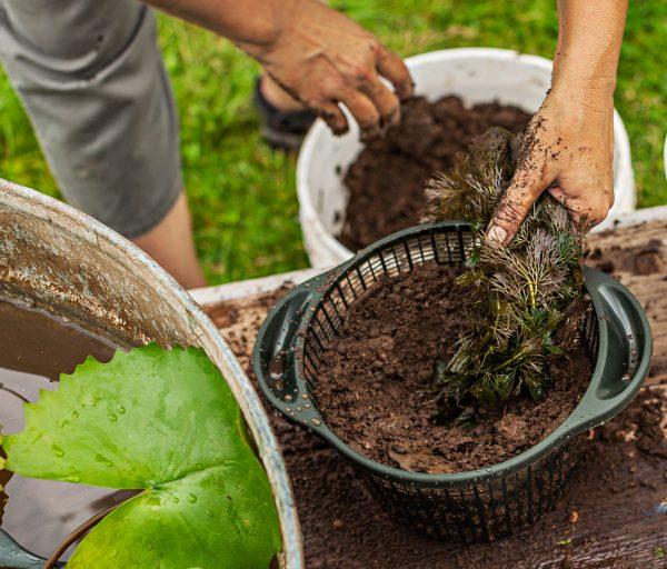 crear-un-jardin-acuatico-en-un-contenedor-08
