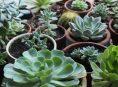 imagen Cultivar suculentas con luz artificial