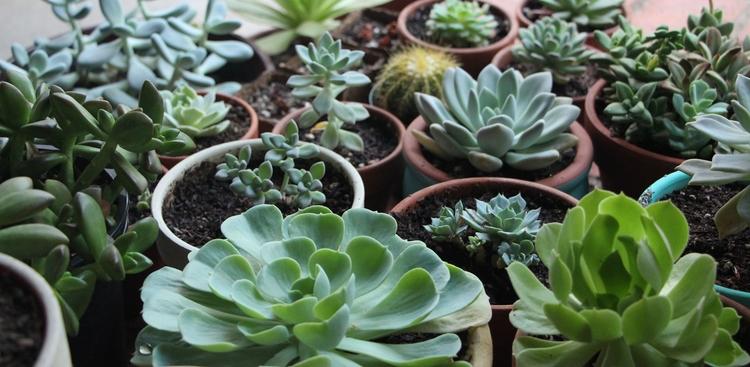 cultivar-suculentas-con-luz-artificial-01