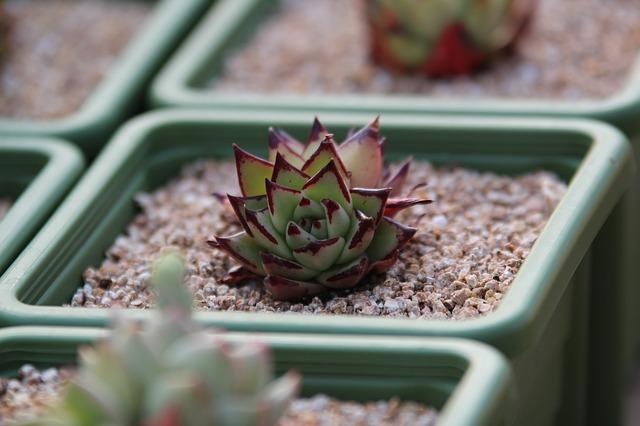 cultivar-suculentas-con-luz-artificial-03