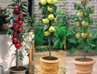 imagen Cultivar árboles frutales en columna