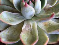 imagen El riego de las plantas suculentas