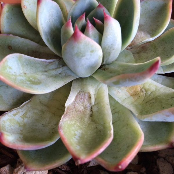 el-riego-de-las-plantas-suculentas-01