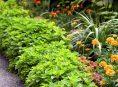 imagen Ideas fáciles para embellecer tu jardín