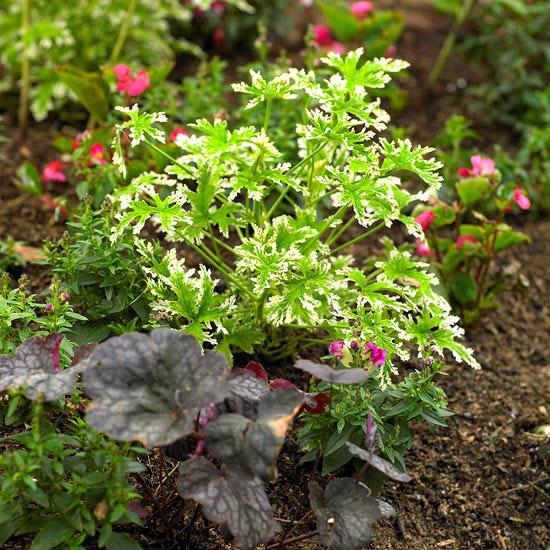 ideas-faciles-para-embellecer-tu-jardin-10
