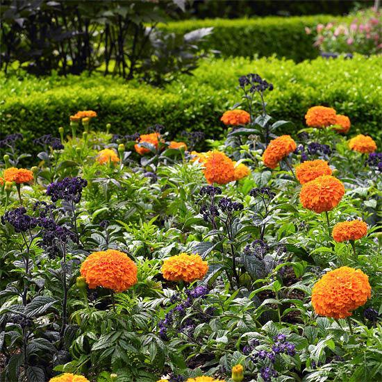 ideas-faciles-para-embellecer-tu-jardin-16