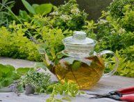 imagen Las mejores plantas para preparar infusiones