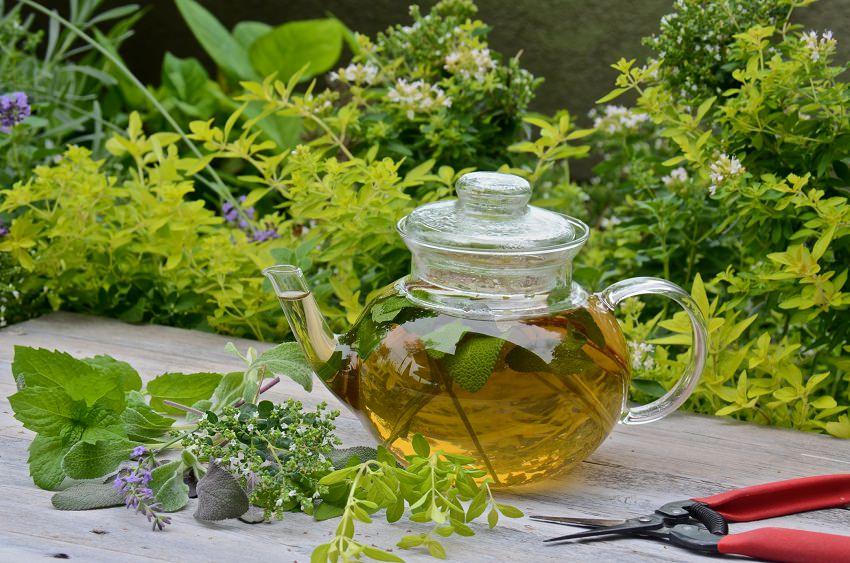 las-mejores-plantas-para-un-jardin-de-hierbas-aromaticas-01