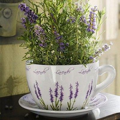 las-mejores-plantas-para-un-jardin-de-hierbas-aromaticas-02