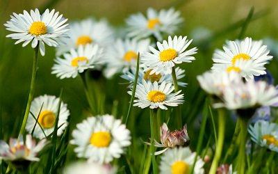 las-mejores-plantas-para-un-jardin-de-hierbas-aromaticas-03