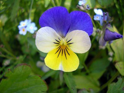 las-mejores-plantas-para-un-jardin-de-hierbas-aromaticas-05