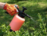 imagen Usos del agua oxigenada en el jardín