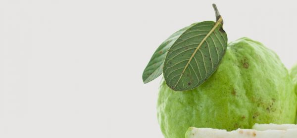 review of related literature about guava leaves Bayabas, psidium guajava, guava,  review of a limited number of studies revealed  guava leaves mouthwash was shown to be effective for aphthous ulcers in.