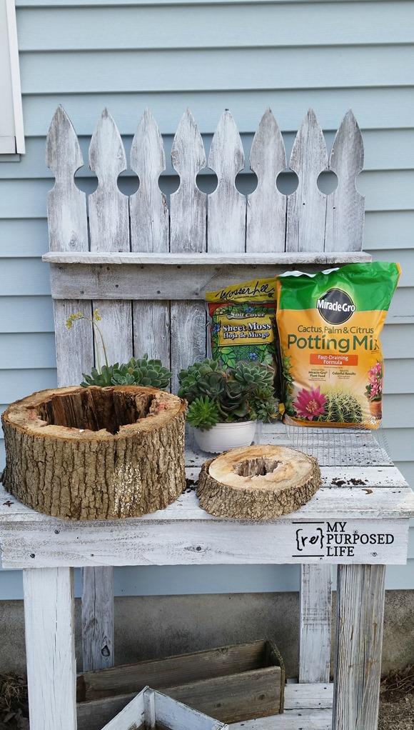 cultivar-suculentas-en-rodajas-de-madera-02