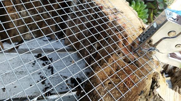 cultivar-suculentas-en-rodajas-de-madera-04