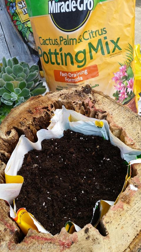cultivar-suculentas-en-rodajas-de-madera-07
