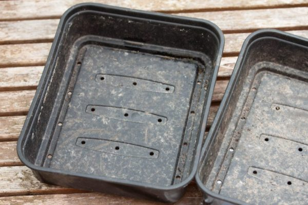 cultivo-de-suculentas-a-partir-de-semillas-02