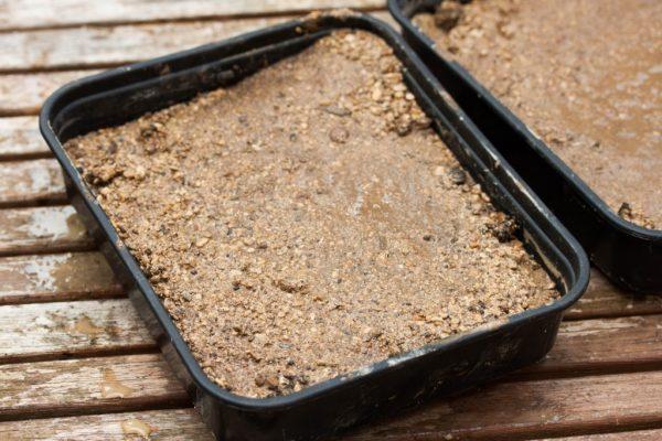 cultivo-de-suculentas-a-partir-de-semillas-03