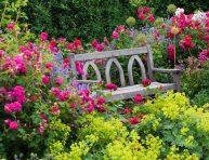 imagen 5 formas de mantener alejados a los insectos de tus flores