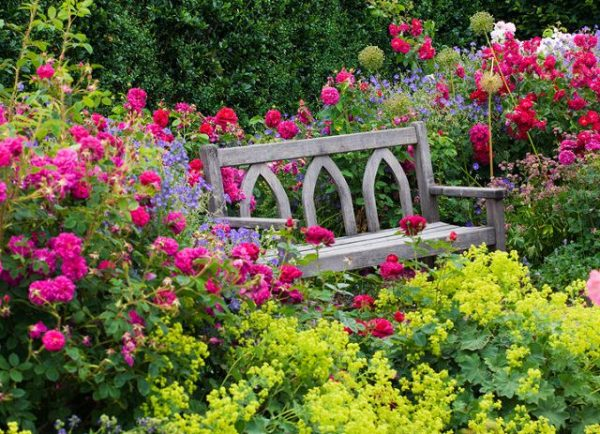 Wooden bench and colourful planting of Rosa and Alchemilla at RHS Rosemoor garden, Devon