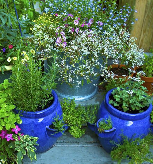 5-formas-de-mantener-alejados-a-los-insectos-de-tus-flores-03