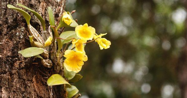 como-cultivar-orquideas-sobre-los-arboles-01