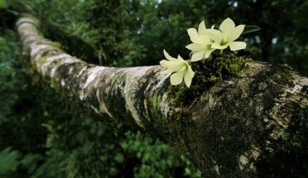 como-cultivar-orquideas-sobre-los-arboles-03