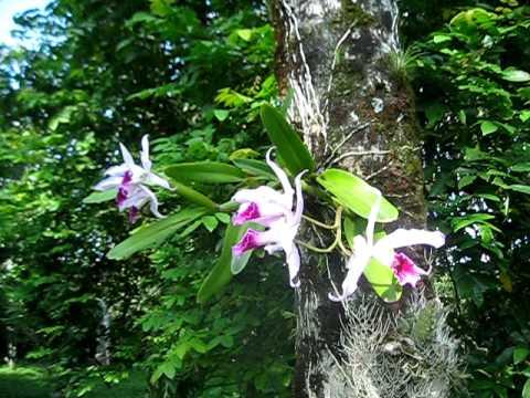 como-cultivar-orquideas-sobre-los-arboles-05