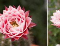 imagen Cultivo y floración de cactus y suculentas
