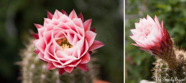 cultivo-y-floracion-de-cactus-y-suculentas-01