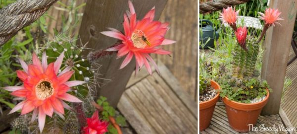 cultivo-y-floracion-de-cactus-y-suculentas-03