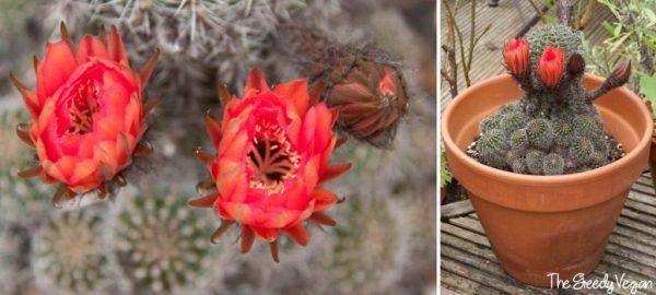 cultivo-y-floracion-de-cactus-y-suculentas-04