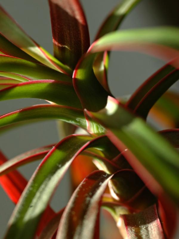las-plantas-que-crecen-bien-en-habitaciones-oscuras-02