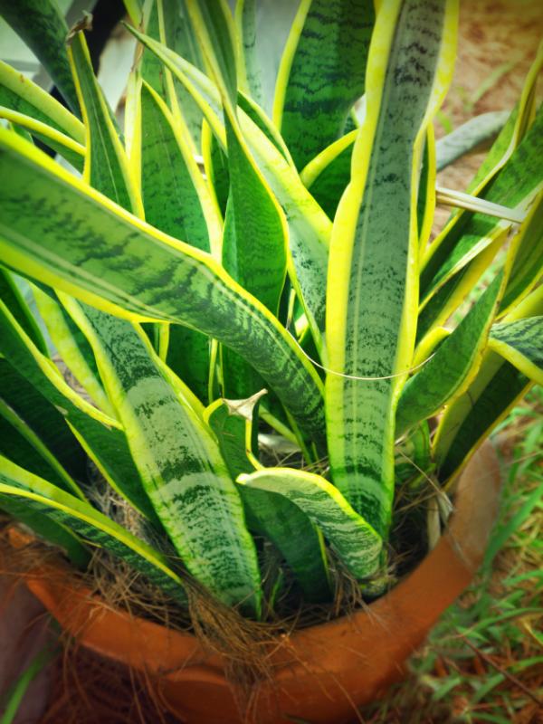 las-plantas-que-crecen-bien-en-habitaciones-oscuras-03