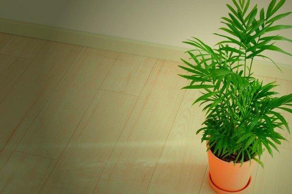 las-plantas-que-crecen-bien-en-habitaciones-oscuras-06