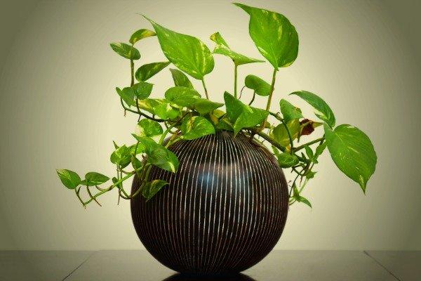 las-plantas-que-crecen-bien-en-habitaciones-oscuras-08