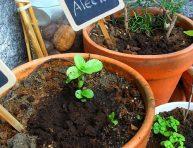 imagen Utiliza los posos de café en tu jardín