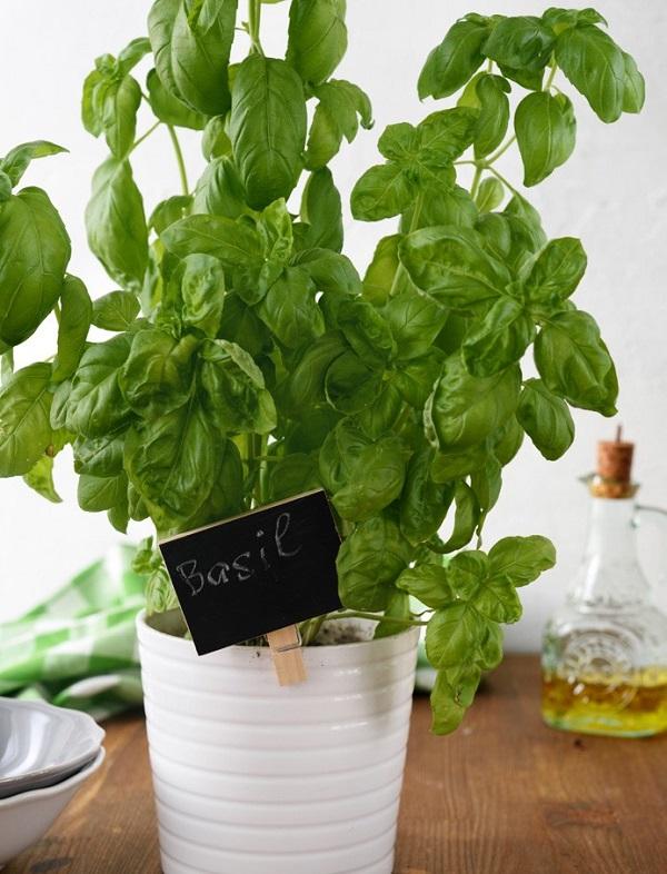 Algunos sencillos trucos de jardiner a for Trucos jardineria