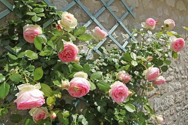 algunos-sencillos-trucos-de-jardineria-03