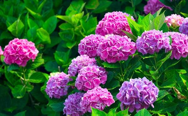 algunos-sencillos-trucos-de-jardineria-09