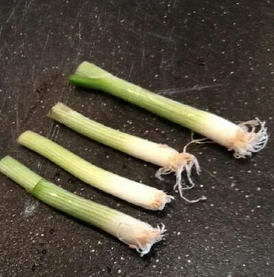 como-cultivar-cebolletas-en-agua-02