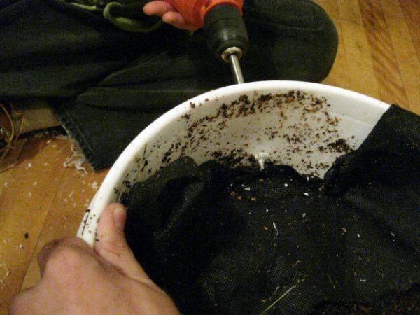 como-cultivar-setas-sobre-posos-de-cafe-02