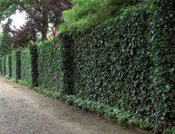 imagen Plantas que reducen el calor de las paredes