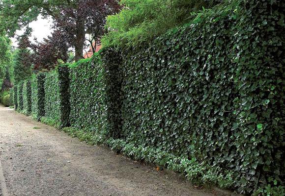 plantas-que-reducen-el-calor-de-las-paredes-02