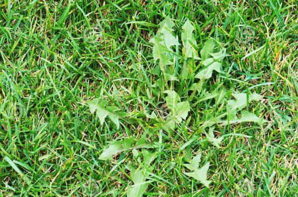 Tips para controlar las malas hierbas for Como evitar que salga hierba en el jardin